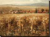 Italian Golden Vineyard Stretched Canvas Print by K. Adams