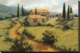 Italian Cypress Stretched Canvas Print by Roger Williams