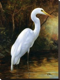 Evening Egret Stretched Canvas Print by  Kilian