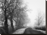 Misty Tree-Lined Road Stretched Canvas Print by Stephen Rutherford-Bate