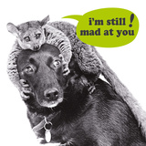 I'M Still Mad At You! Affiche