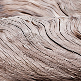Driftwood Waves II Affiches par Günter Lenz