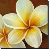 Frangipani I Stretched Canvas Print by  Clunia