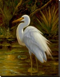 Tropical Egret II Stretched Canvas Print by Kilian