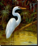 Tropical Egret I Stretched Canvas Print by Kilian