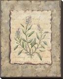 Vintage Herbs, Sage Reproduction sur toile tendue par Constance Lael