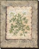 Vintage Herbs-Parsley Reproduction sur toile tendue par Constance Lael