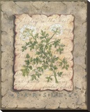 Vintage Herbs, Parsley Stretched Canvas Print by Constance Lael