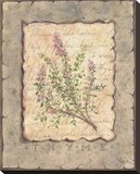 Vintage Herbs, Thyme Stretched Canvas Print by Constance Lael