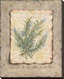 Vintage Herbs-Rosemary Reproduction sur toile tendue par Constance Lael