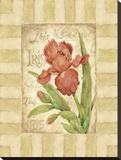 Belle Fleur II Stretched Canvas Print by Betty Whiteaker