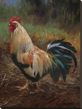 White And Green Rooster Stretched Canvas Print by Nenad Mirkovich
