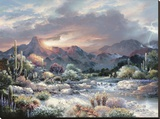 Sonoran Sunrise Stretched Canvas Print by James Lee