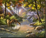Doe Ray Me Creek Stretched Canvas Print by Sung Kim