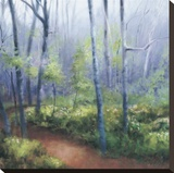 Early Spring Woods Stretched Canvas Print by Robert Striffolino