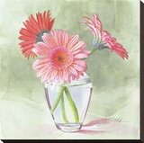 Coral Gerbera Stretched Canvas Print by Mary Kay Krell