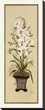 Orchid&#233;e II Reproduction transf&#233;r&#233;e sur toile par Constance Lael