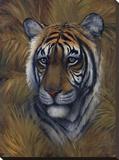Safari Tiger Stretched Canvas Print by Joe Sambataro