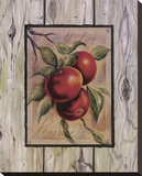 Pomme Fructus Reproduction transf&#233;r&#233;e sur toile par Constance Lael