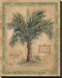 Palm Carpoxylon Stretched Canvas Print by Betty Whiteaker