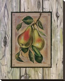Poire Fructus Reproduction transf&#233;r&#233;e sur toile par Constance Lael