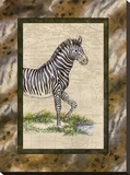 Zebra Stretched Canvas Print by Janet Kruskamp