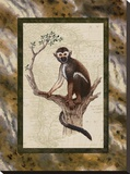 Squirrel Monkey Stretched Canvas Print by Janet Kruskamp