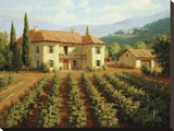 Tuscan Vineyard Stretched Canvas Print by Roger Williams
