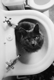 Cat Sitting In Bathroom Sink Plakater af Natalie Fobes