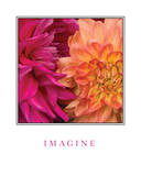 Imagine Flowers Posters by Maureen Love