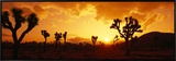Sunset, Joshua Tree Park, California, USA Framed Canvas Print by Panoramic Images