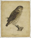 Vintage Owl Posters by  Von Wright