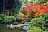 Fall Colors at Portland Japanese Gardens, Portland Oregon Plakater af Craig Tuttle