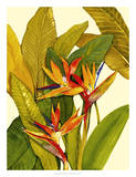 Tropical Bird of Paradise Giclee Print by Tim O'toole