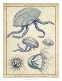 Lamarck Medusa II Giclee Print by  Lamarck