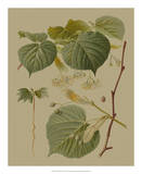 Forest Foliage I Giclee Print by  Hempel