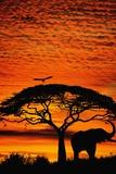 Elephant Under Broad Tree Plakater af Jim Zuckerman