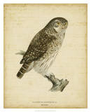 Non-Embellished Vintage Owl Poster by Von Wright