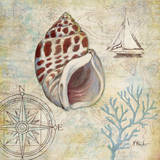 Discovery Shell IV Prints by Paul Brent