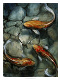 Tres Koi I Prints by Tim O'toole