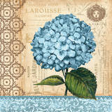 Hydrangea Prints by Gregory Gorham