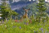 Deer in Wildflowers Posters af Craig Tuttle
