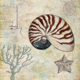 Discovery Shell I Prints by Paul Brent