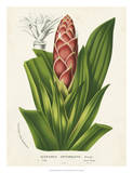 Tropical Bromeliad I Prints by Van Houtteano 