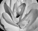 Macro Flower I Print by Brian Moore