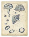 Lamarck Medusa I Giclee Print by  Lamarck
