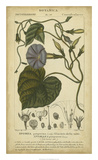 Floral Botanica I Posters by  Turpin