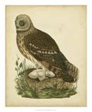 Antique Nozeman Owl I Giclee Print by  Nozeman