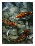 Tres Koi II Giclee Print by Tim O'toole
