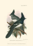 Birds in Nature V Posters by J.C. Keulemans